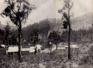 old noojee